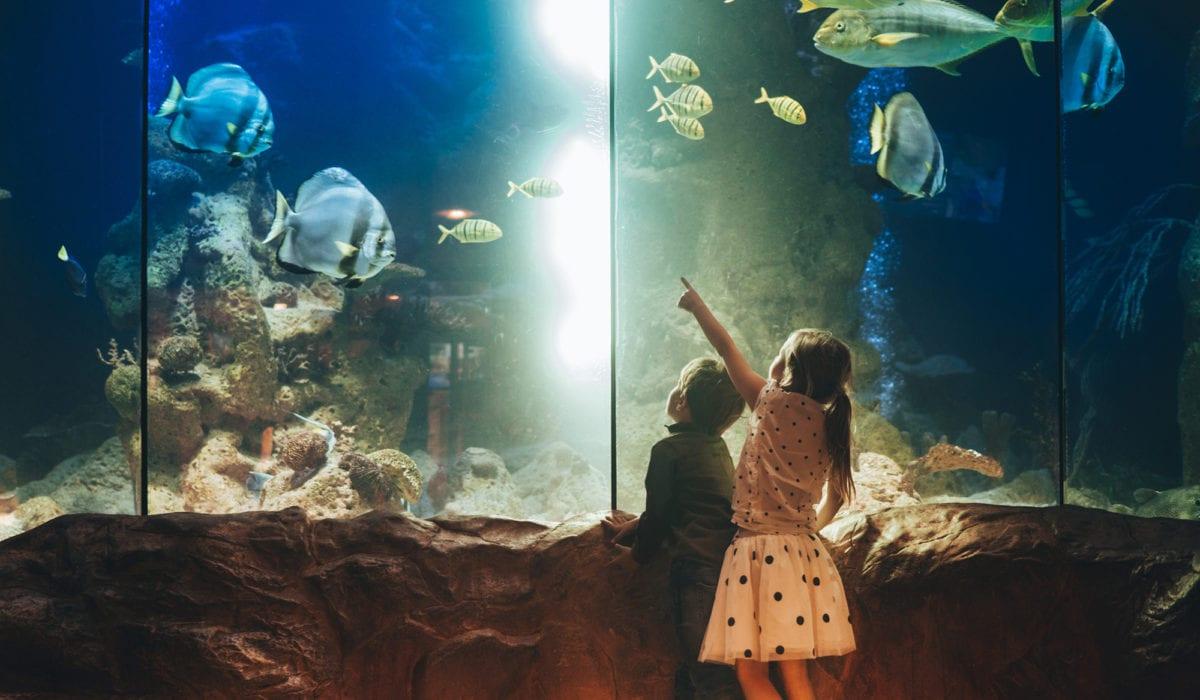 Kids looking at an aquarium